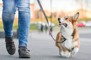 Dog Walker Salford