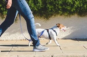 Dog Walker Stamford Lincolnshire (PE9)