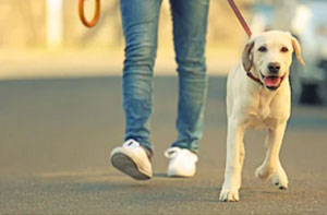 Dog Walker Sunbury-on-Thames Surrey (TW16)