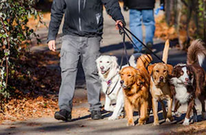 Dog Walkers Woodley UK (0118)